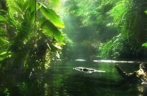 peru-amazone river_don alberto_sjamanisme_peru_kanexia_inwijdingen_heling_ceremonie_spiritualiteit_