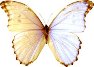 Vlinder bij Martijn_terugkomavond